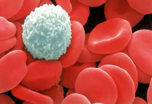 white-blood-cell-texiladigipedia.com