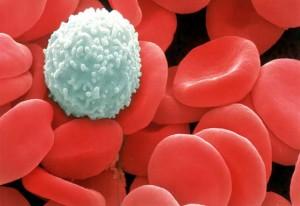 white-blood-cell-texiladigipedia.com